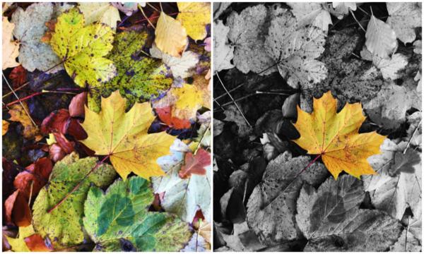 kleuraccent fotobewerking
